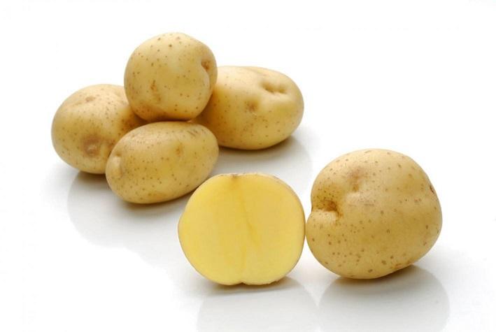 фото сорта картофеля Пила