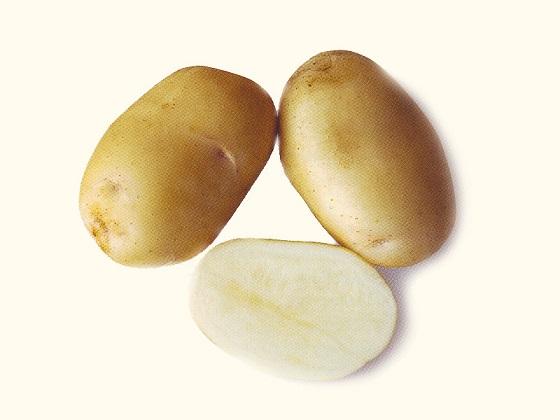 фото сорта картофеля Самба