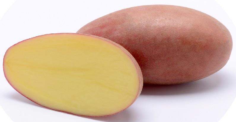 фото сорта картофеля Санибель